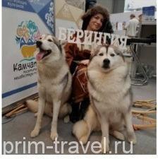 Камчатский край привлекает туристов вулканами, медведями, гейзерами
