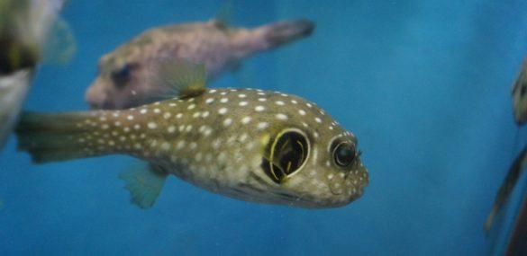 Приморский океанариум в интернете:  аквариумы есть, шоу нет