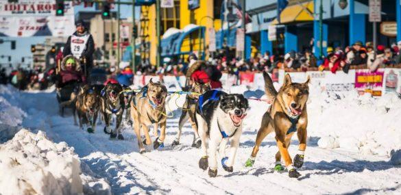 Ощутить дух Аляски можно во время Iditarod – ежегодных гонок на собачьих упряжках
