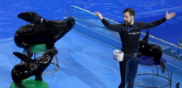 Морские котики удивят гостей Приморского океанариума