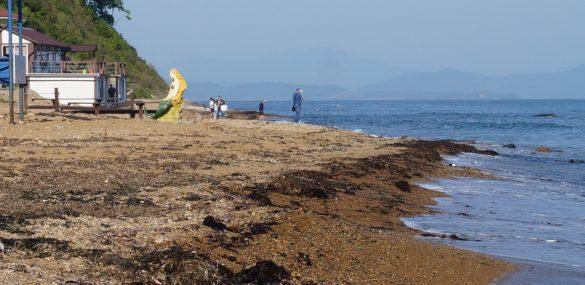 Почти 80 пляжей откроют для купания в Приморье этим летом