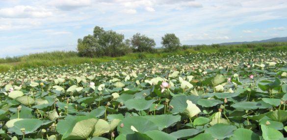 Любоваться озером Ханка в Приморье можно будет с видовой площадки