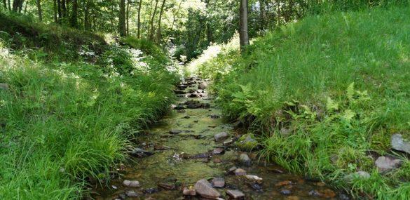 Экотуризм будут развивать на ДВ-гектаре на Сахалине