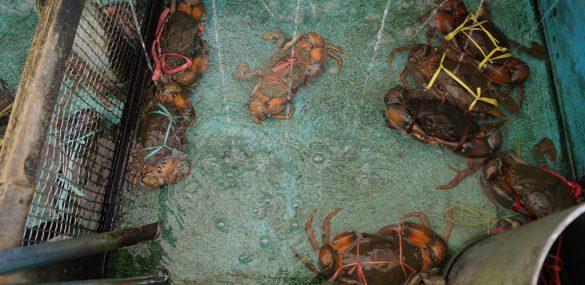 Аквафермы Камчатки могут стать новыми объектами туризма