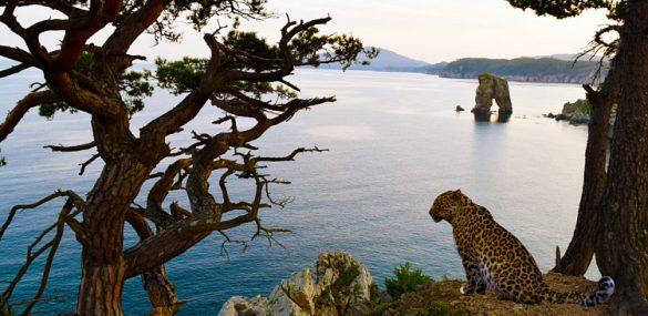 Туристический эко-кластер «Земля леопардов» планируют создать в Приморье