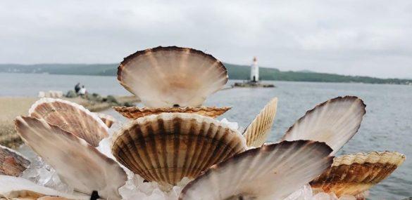 Владивосток вознесся на гребень – вкусный фестиваль «пошел» по стране