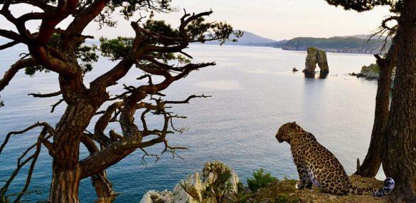 Туристско-рекреационный кластер «Земля леопарда» приобретает реальные очертания