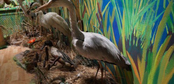 В Приморье появится музей Уссурийской тайги