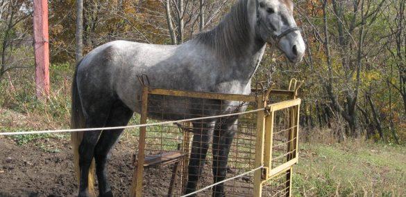 В Приамурье появится турмаршрут на уникальное коневодческое хозяйство