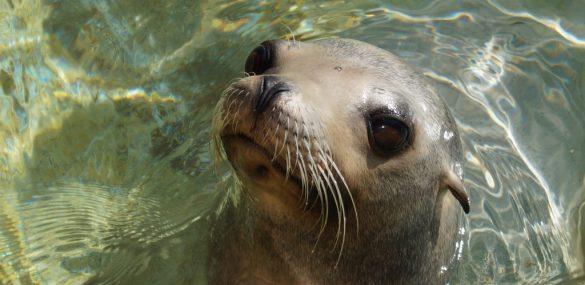 Фестиваль морских животных «Море жизни» пройдет на Камчатке