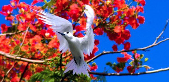Сайпан в апреле: райский фестиваль, остров в огне и гонка с препятствиями
